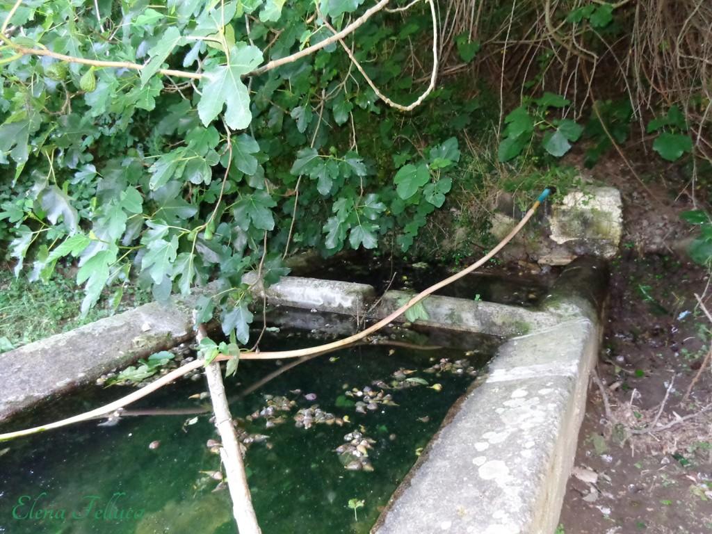 Fontanile dell'acqua Precilia, Bracciano.