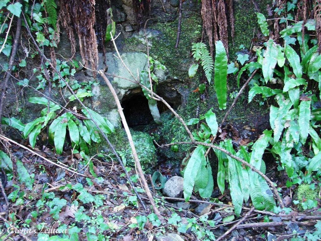 Aqua Traiana-Paola. Fosso di Grotte Renara. Bottino di presa?