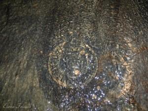 """Bracciano (RM), """"aqua Traiana"""" e """"aqua Paula"""",  condotto della Botte delle Cinque Vene, bollo laterizio di Anteros Severianus."""