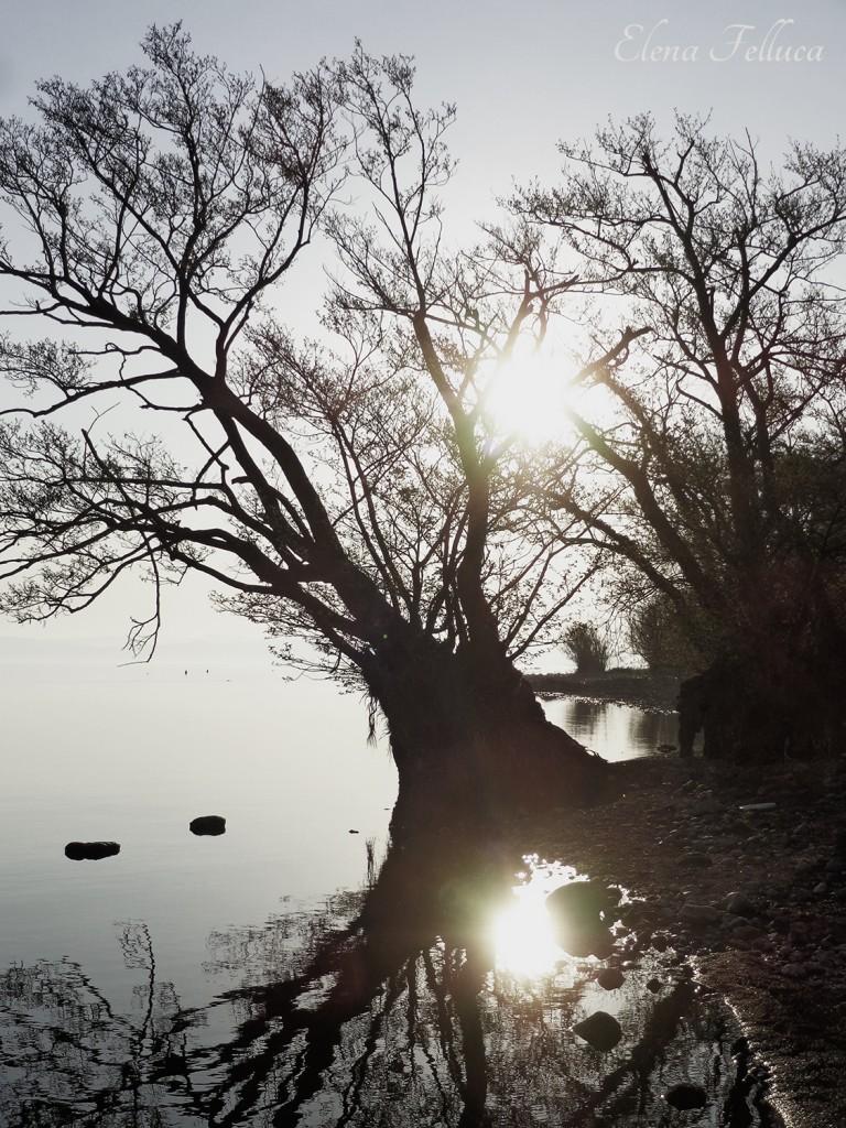 Lago Sabatino, veduta da Bracciano. Marzo 2017.